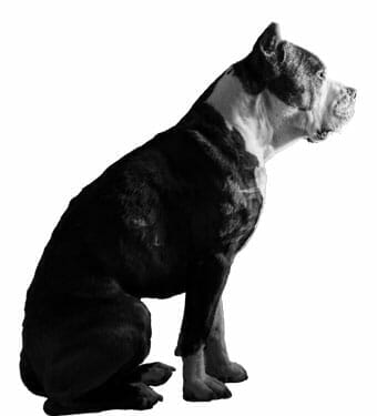 An Obedient Dog Sitting