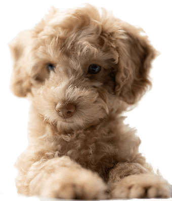 Fluffy Puppy Jumping Up
