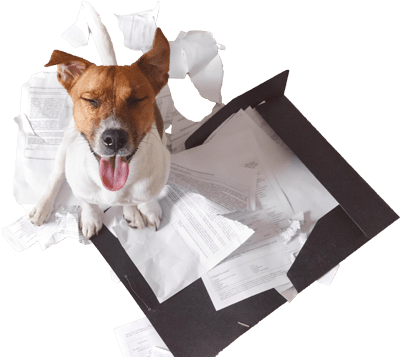 Bad Dog With Destroyed Papers